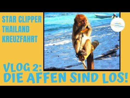 star-clipper-vlog-2-die-affen-sind-los